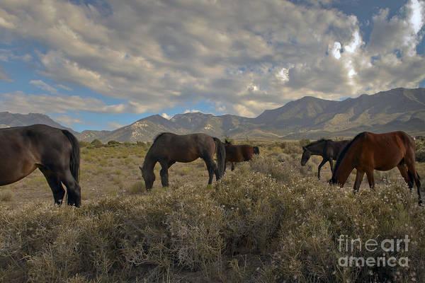 Nevada Art Print by Glenn Vidal