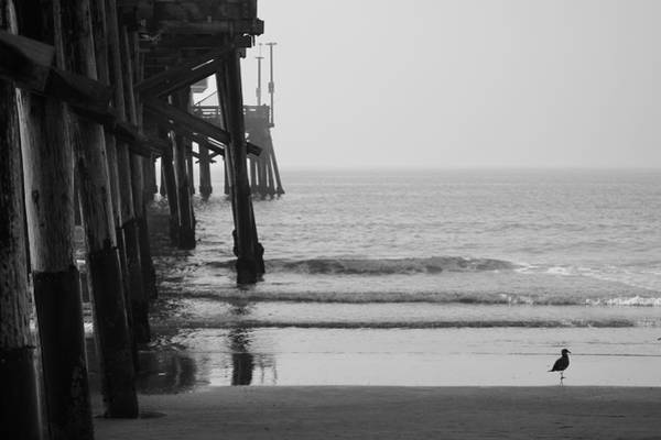 Photograph - Newport Beach Pier by Brian Eberly
