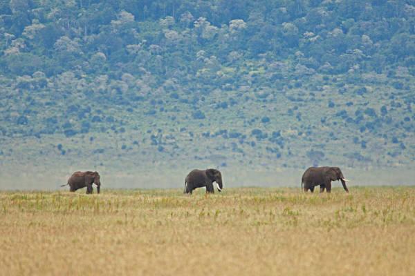 Photograph - Ngorongoro Elephant Walk by John  Nickerson