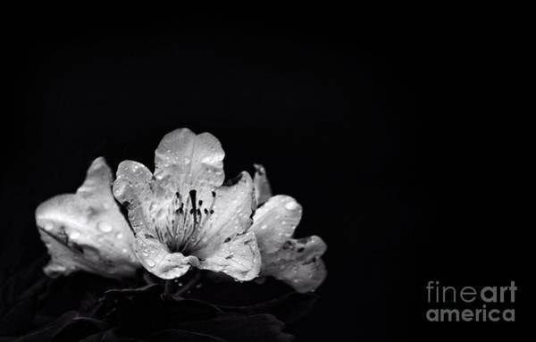 Wall Art - Photograph - Nocturnal Blossom by Evelina Kremsdorf