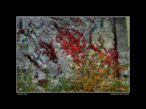 Photograph - North Country Ode To Pollock by Wayne King