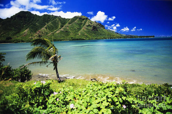 Oceanfront Photograph - Oahu Kahana Bay by Peter French - Printscapes