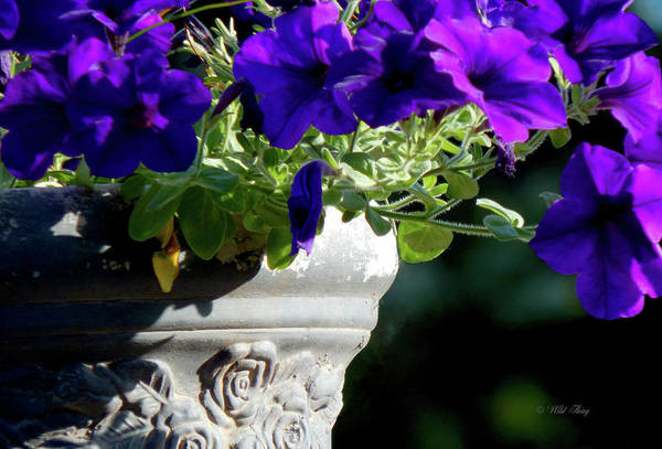 Photograph - Ode To A Grecian Urn by Wild Thing