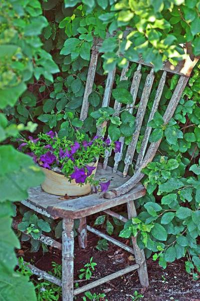 Photograph - Old Chair New Petunias by Amanda Smith