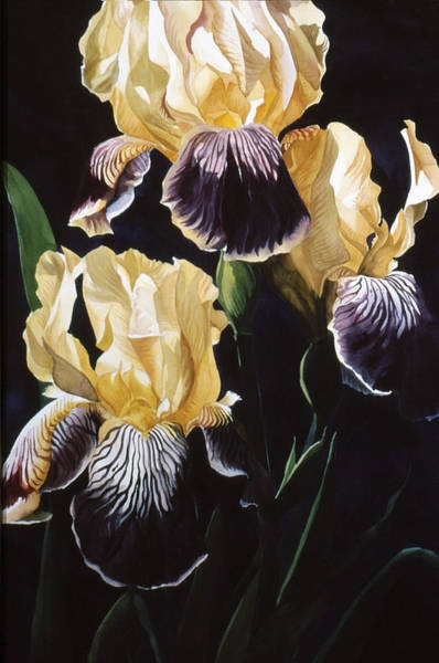 Painting - Old Fashion Iris by Alfred Ng