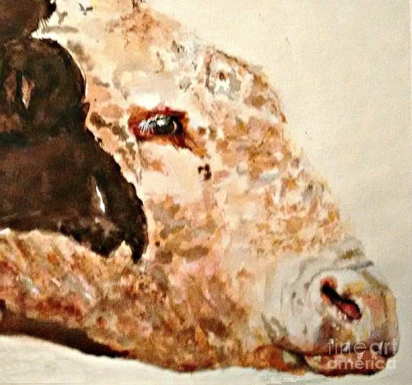 Hereford Bull Painting - Old Man   by Susan Gahr