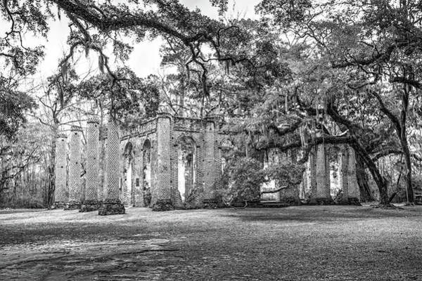 Photograph - Old Sheldon Church - Tree Canopy by Scott Hansen