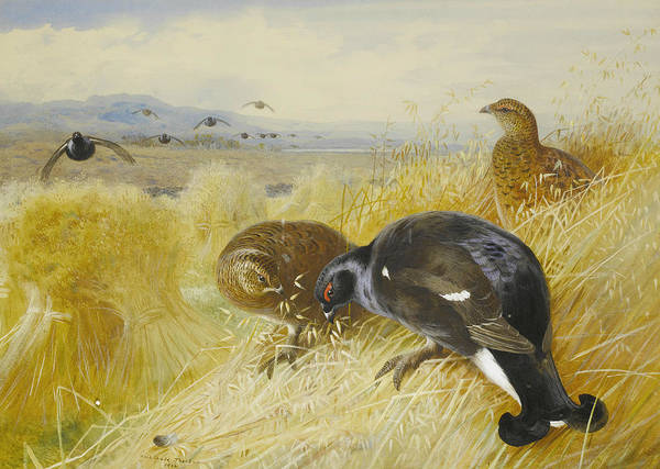 Painting - On The Stooks - Blackgame by Archibald Thorburn