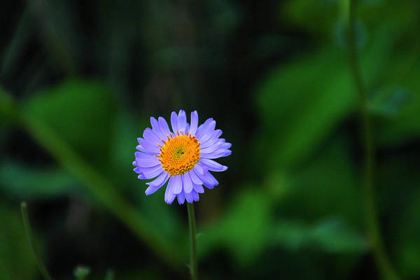 Little Things Photograph - One Little Wildflower by Jeff Swan