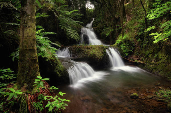 Photograph - Onomea Falls by Christopher Johnson