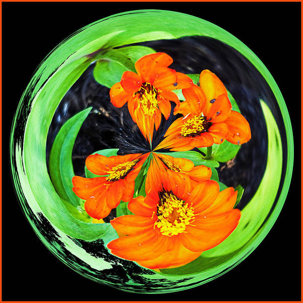 Photograph - Orange Zinnia Orb by Bill Barber