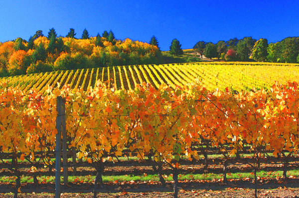 Wine Tasting Photograph - Oregon Wine Country by Margaret Hood