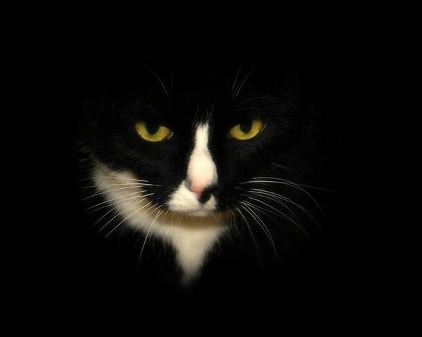 Black Cats Photograph - Oreo by Angie Tirado