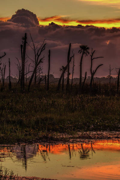 Photograph - Orlando Wetlands Sunrise by Dorothy Cunningham