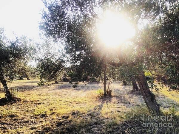 Photograph - Ortona Olive Grove by Angela Rath
