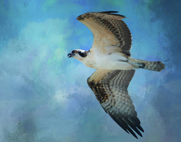Photograph - Osprey by Gloria Anderson