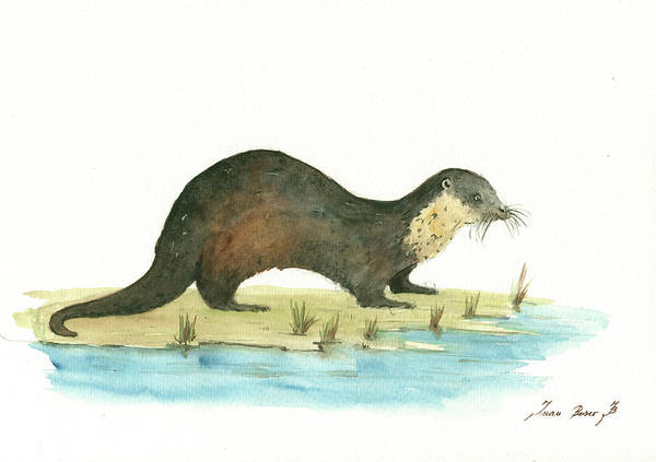 Wall Art - Painting - Otter by Juan Bosco