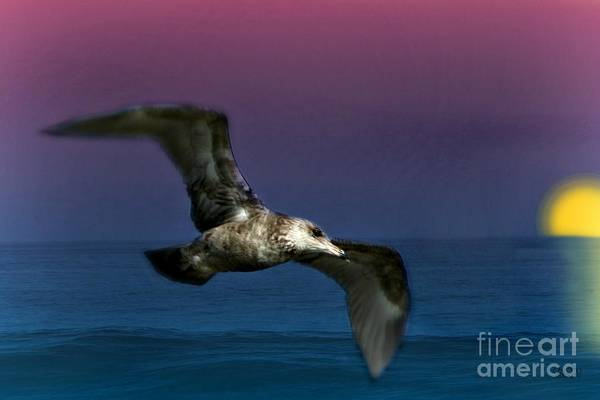 Photograph - Over The Ocean by Barbara S Nickerson