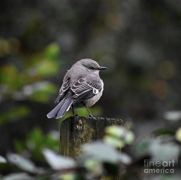 Critters Photograph - Over The Shoulder by Skip Willits