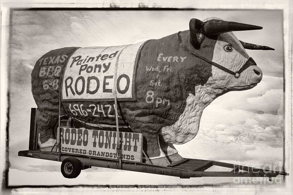 Steer Photograph - Painted Pony Rodeo Lake George by Edward Fielding