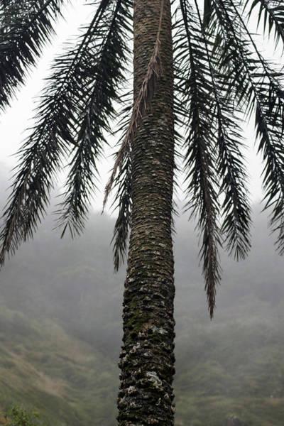 Photograph - Palm, Koolau Trail, Oahu by Kenneth Campbell