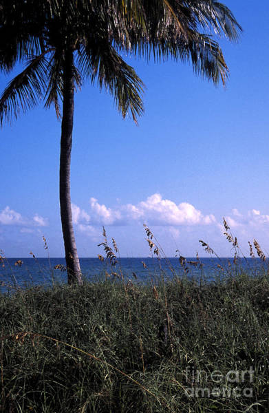 Digital Art - Palm Tree And Sea Grass On The Water Under Blue Sky by William Kuta