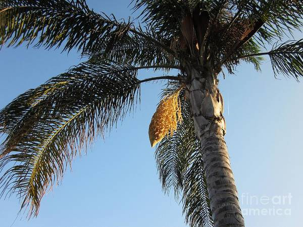 Photograph - Palm Tree In Torremolinos by Chani Demuijlder