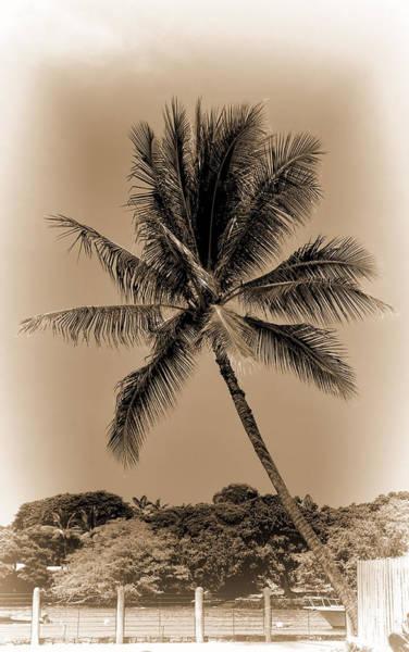 Photograph - Palm Tree by Pamela Walton