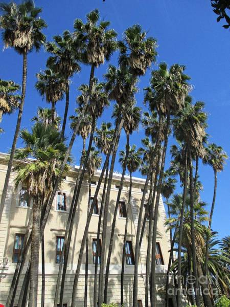 Photograph - Palm Trees In Malaga by Chani Demuijlder