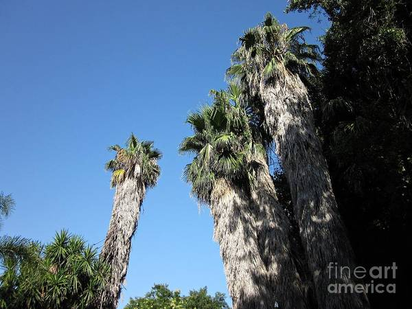 Photograph - Palm Trees In Torremolinos by Chani Demuijlder