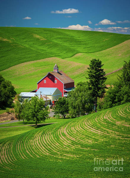 Western Pacific Photograph - Palouse Red Barn by Inge Johnsson