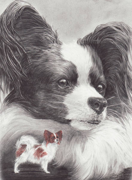 Drawing - Papillon by Laurie McGinley