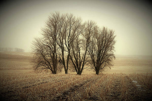 Wall Art - Photograph - Pasture Trees by Toni Grote