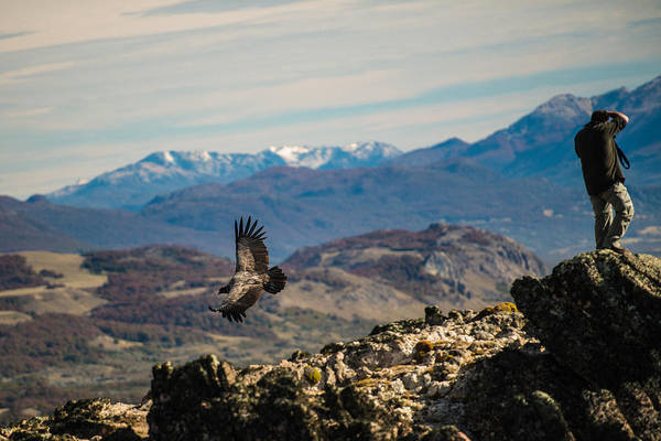 Photograph - Patagonia Condor by Walt Sterneman