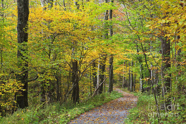 Photograph - Path In The Forest by Jill Lang