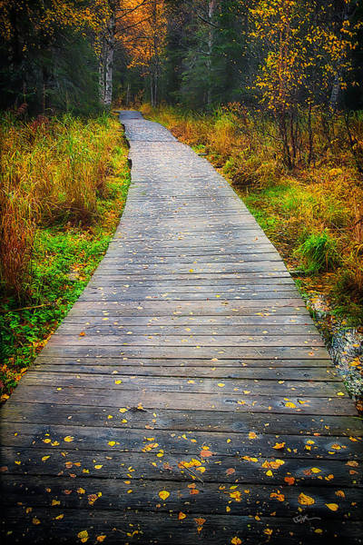 Hiking Path Photograph - Pathway Home by Ed Boudreau