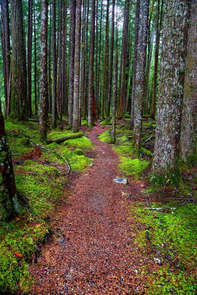 Photograph - Pathways by David Andersen