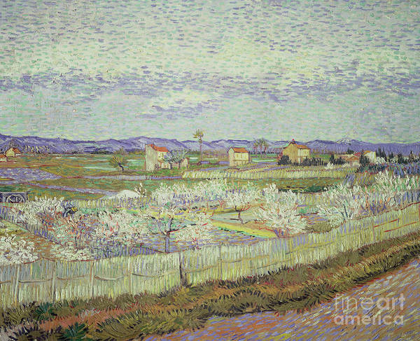Wall Art - Painting - Peach Trees In Blossom by Vincent van Gogh