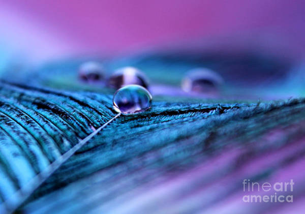 Exquisite Photograph - Peacock Dreams by Krissy Katsimbras
