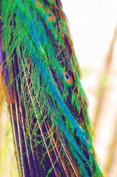 Photograph - Peacock Feathers by Donna Bentley