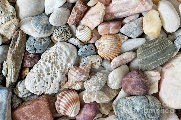Wall Art - Photograph - Pebble Stones And Scallops And Shells by Michal Boubin