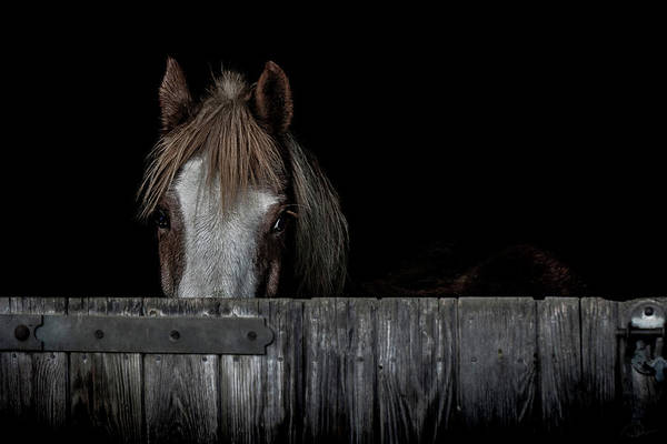 Ponies Photograph - Peek A Boo by Paul Neville