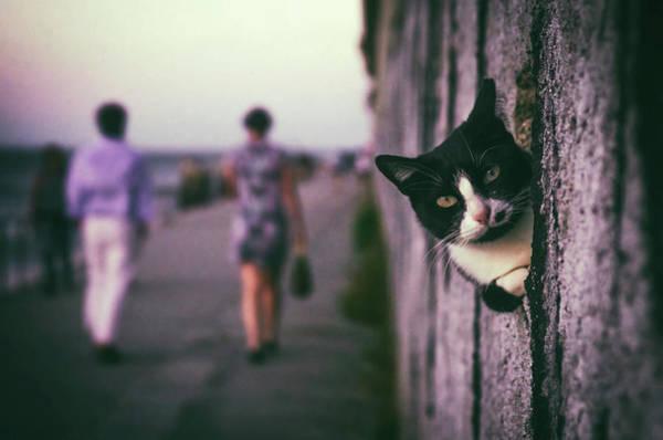 Wall Art - Photograph - Peeking Cat by Carlos Caetano