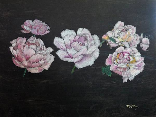 Pastel - Peony   by Richard Le Page