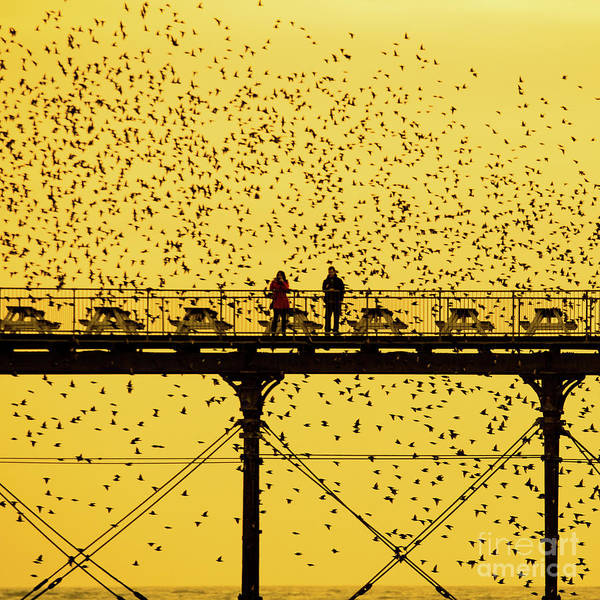 People On The Pier Sunset And Starlings In Aberystwyth Wales Art Print