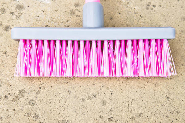 Broom Photograph - Pink Broom by Tom Gowanlock