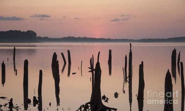 Photograph - Pink Dawn II by Debra Fedchin