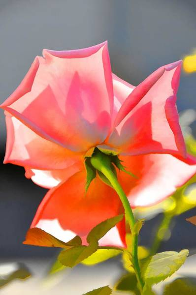 Wall Art - Photograph - Pink Delight by Jan Amiss Photography