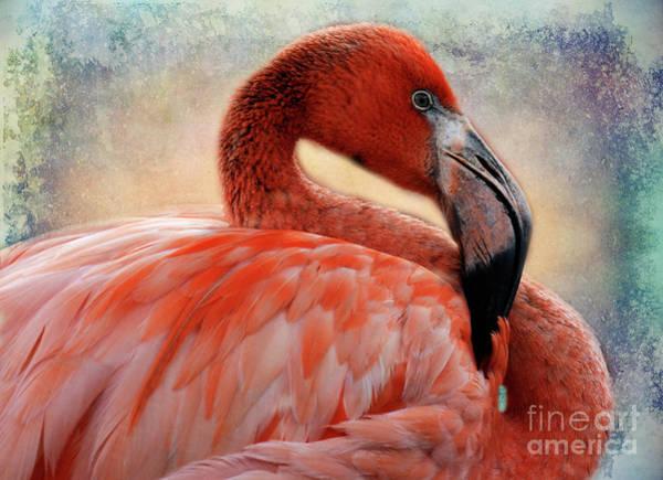 Wall Art - Photograph - Pink Flamingo 1 by Bob Christopher