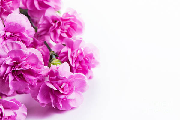Wedding Bouquet Photograph - Pink Soft Spring Flowers Bouquet On White Background by Michal Bednarek